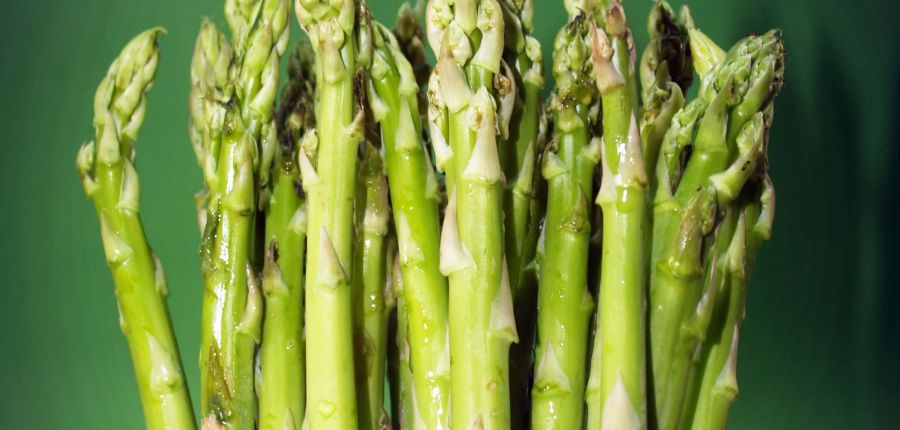 Asparagus – Queen of Vegetables