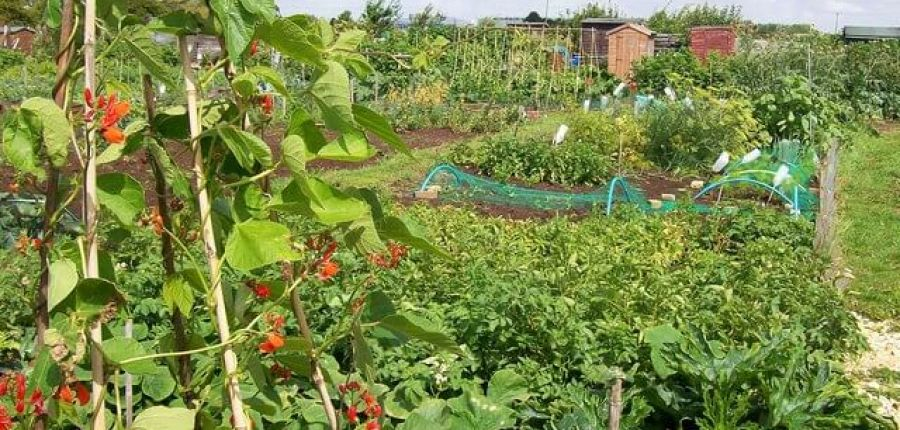 Love your allotment