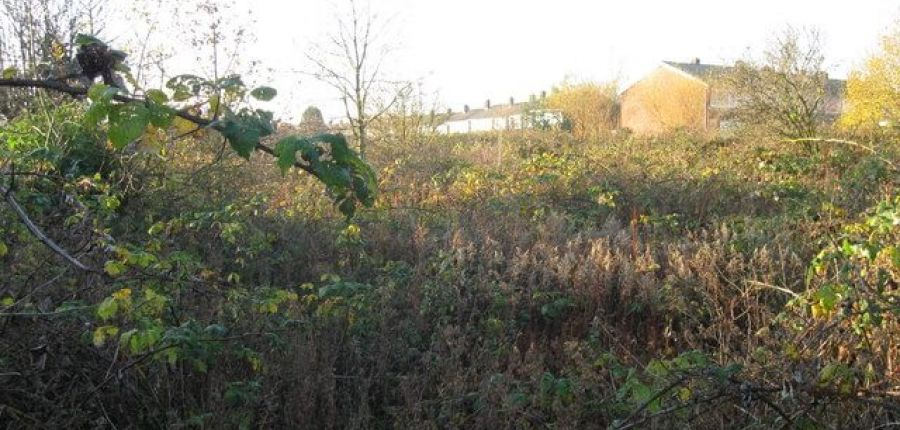 Starting out on an allotment: what to do first
