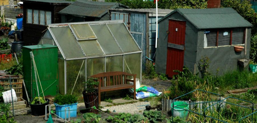 Give your greenhouse a treat