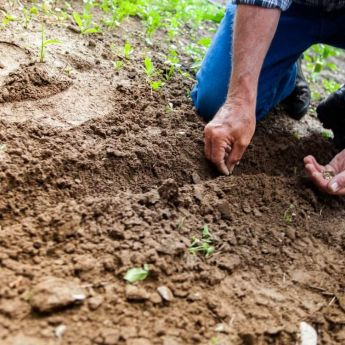 Creating a fine tilth and sowing seed