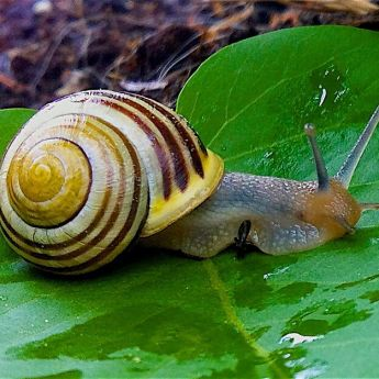 Dealing with Slugs and Snails