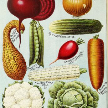 Veg to sow and plant now – but be quick!