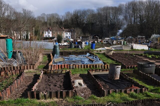 Starting out on an allotment: what to do next