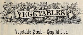 Planning ahead – veg seeds for the coming season