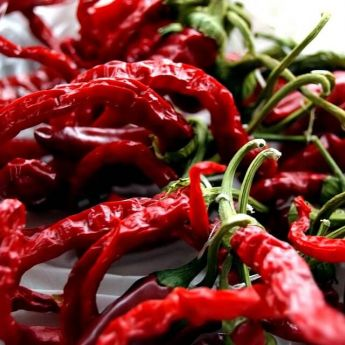 Chillies come to town