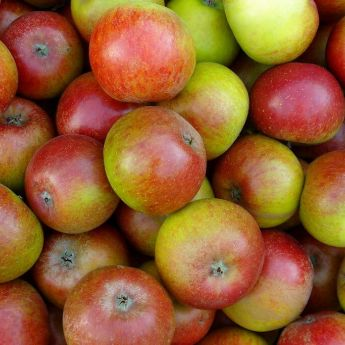 Surplus apples? Bring them to Riverside