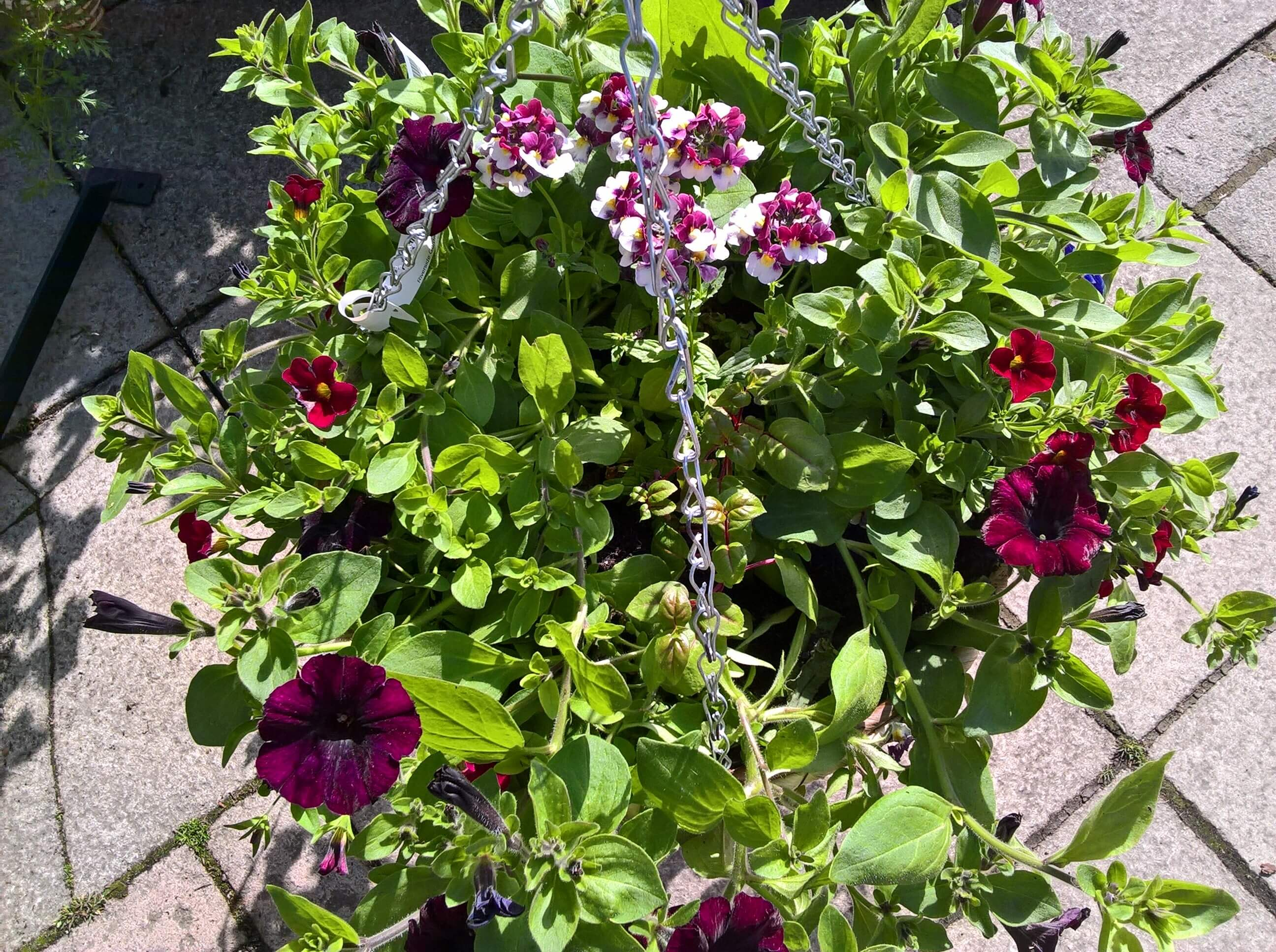 Hanging baskets are ready